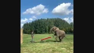 الاکلنگ با فیل