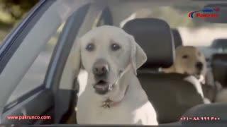 کارواش خانوادگی سگ ها