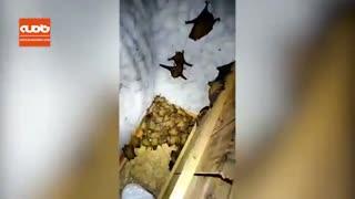 هجوم خفاشها به یک آپارتمان به دلیل سرما