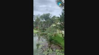 سفر به بهشت خدایان،بالی