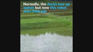 روبات Aigamo برای مراقبت و از بین بردن علفهای هرز در مزارع برنج