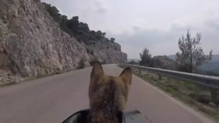 دوچرخهسواری در جادهای زیبا با همراهی بچهگربه
