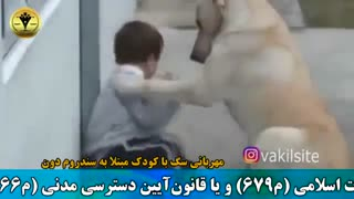 مهربانی سگ با کودک بیمار
