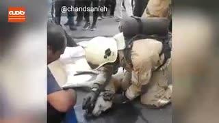 تلاش دیدنی آتش نشانان ایستگاه٩٣ تهران برای نجات جان یک سگ