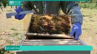 آموزش زنبورداری کامل و آسان