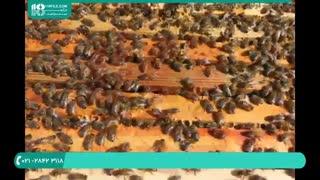 پرورش زنبور عسل در باغ