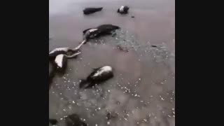 آلودگی دریای خزر و مرگ پرندگان