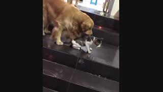 سگ میانجی