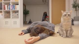 گربهها و مرگ الکی